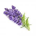 Hanging parfum - fresh flower - lavendel